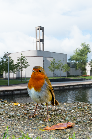 Waterfront Robin