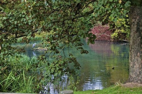 Heron & Water Hen Kelvingrove