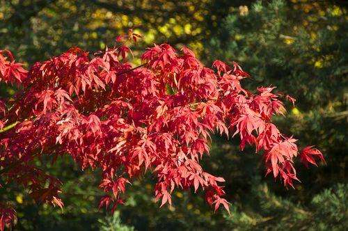 Red & Green Botanic