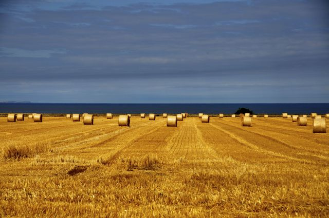 Kingsbarns Harvest Field