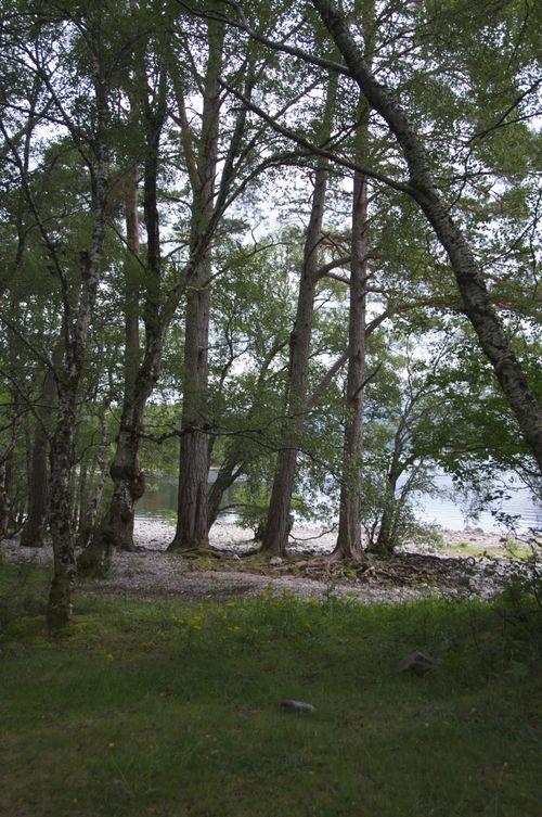 Trees at Loch Maree